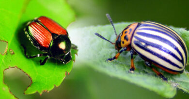 Integrated Pest Management or IPM