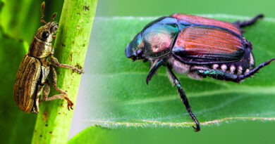 Pests of Agricultural