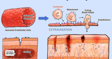 Inflammatory response and Cell Migration