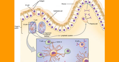 Response of Cells to the Pathogen
