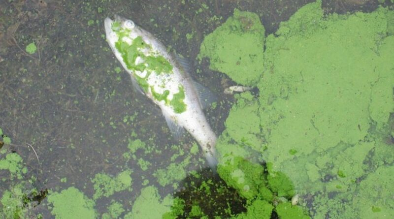 Eutrophication: Causes Effect and its Control